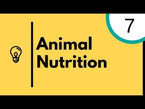Animal Nutrition - IGCSE Biology
