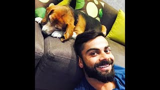 Virat Kohli & BRUNO || Dogs of Indian Cricketers  || Celebrity dogs