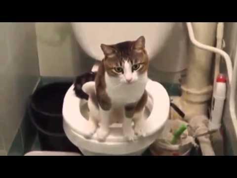 дач хожу в туалет черной водой приготовить салат