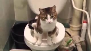 Кот на унитазе )))