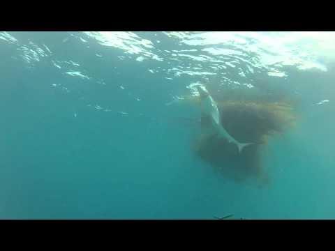 Diving Banks Peninsula