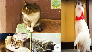 Cute Funny And Smart Cats