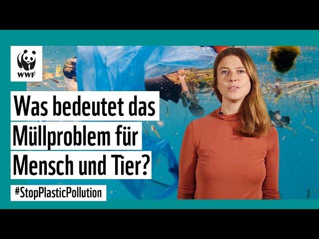 Was bedeutet das Plastikproblem für Tier und Mensch?