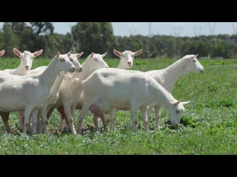 Victorian eCommerce success story: Goat Soap Australia & Alibaba