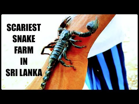 Matara Snake Farm | Places to see in Mirissa | South Sri Lanka Travel