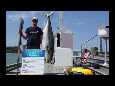 World Record Yellowtail Kingfish