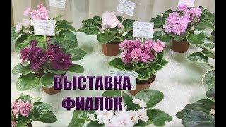 Смотреть видео Выставка фиалок в Санкт-Петербурге онлайн