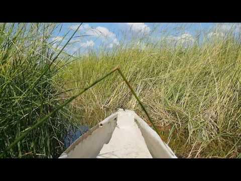 P5098211   Mokorotochtje door Okavango delta
