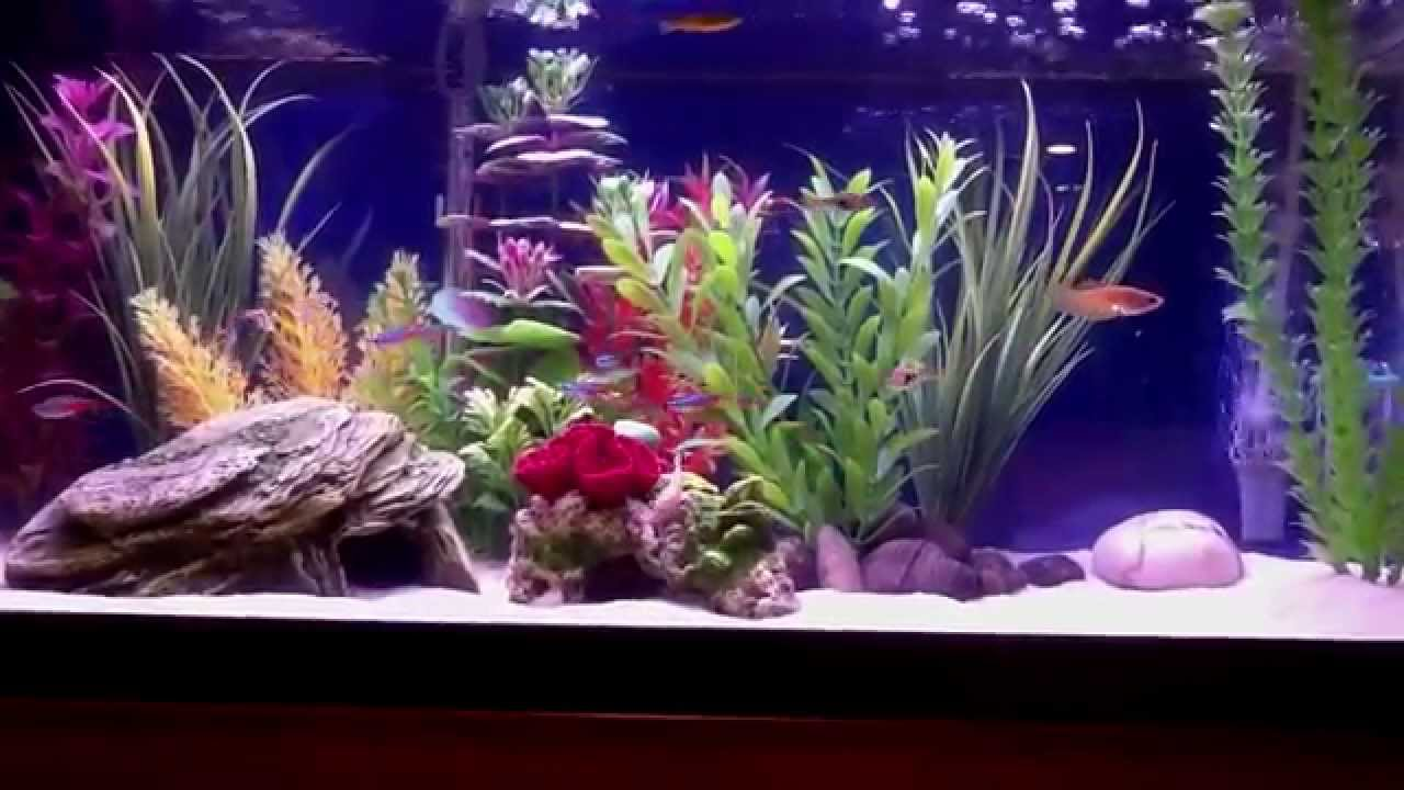 20 gallon freshwater aquarium - Freshwater Aquarium Design Ideas