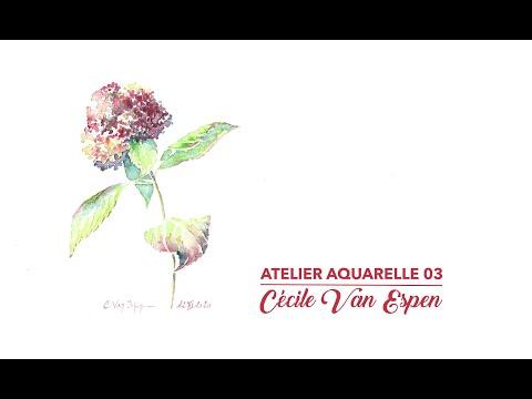 Atelier Aquarelle 03 : Hortensia