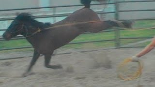 Stop a horse from kicking