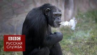 Курящая шимпанзе поразила посетителей зоопарка в Северной Корее