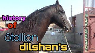 Stallion dilshan
