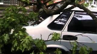 В Сумах сухое дерево упало на машину
