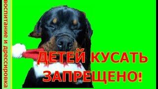 КУСАТЬ ДЕТЕЙ ЗАПРЕЩЕНО!воспитание и дрессировка собаки