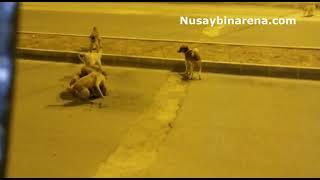 Nusaybin'de bir grup köpek, bir köpeğe saldırma anı görüntülendi