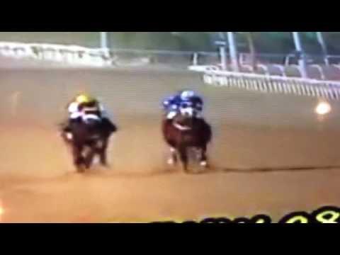Kuwait horse rac