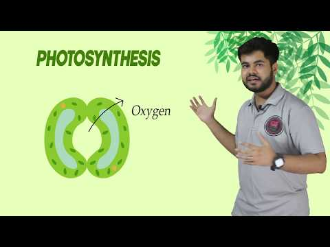 Class 7 Science Ch -1 Nutrition in Plants - Photosynthesis I Class 6 to 10 I Food Process in Plant