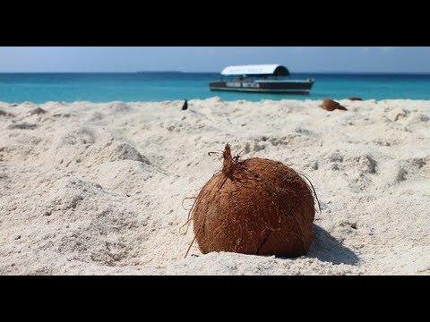 Chiến lược kinh doanh thông minh – Bài học từ anh bán dừa – Những ai làm sales nhất định phải biết