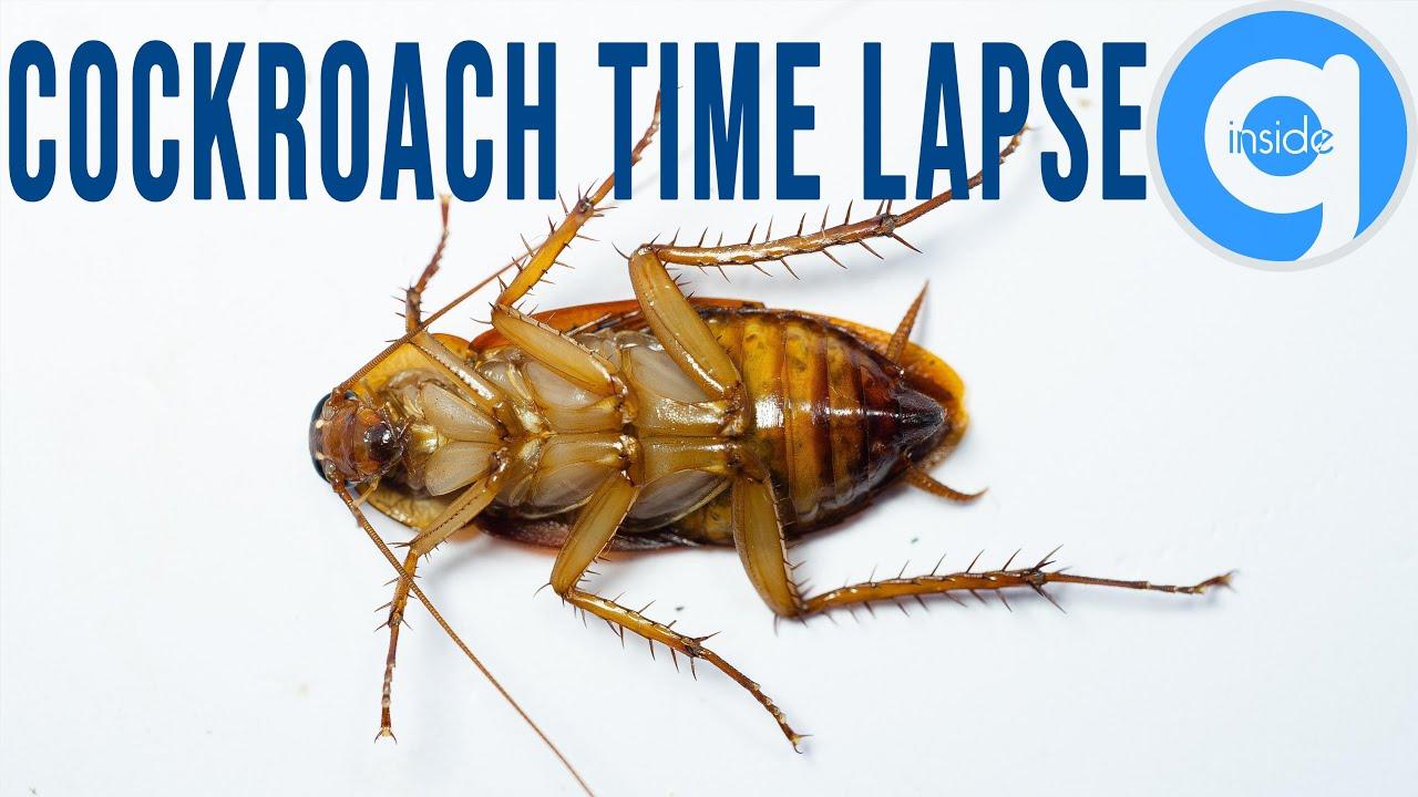 Cockroach Time Lapse