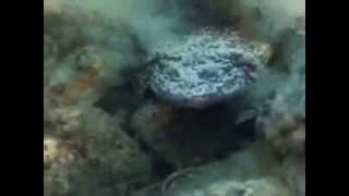 El Mundo Submarino De Jacques Cousteau   La Leyenda Del Lago Titicaca