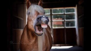 Verrückte Pferdesachen-in-der-Box-Challenge mit Andrea & Max :P