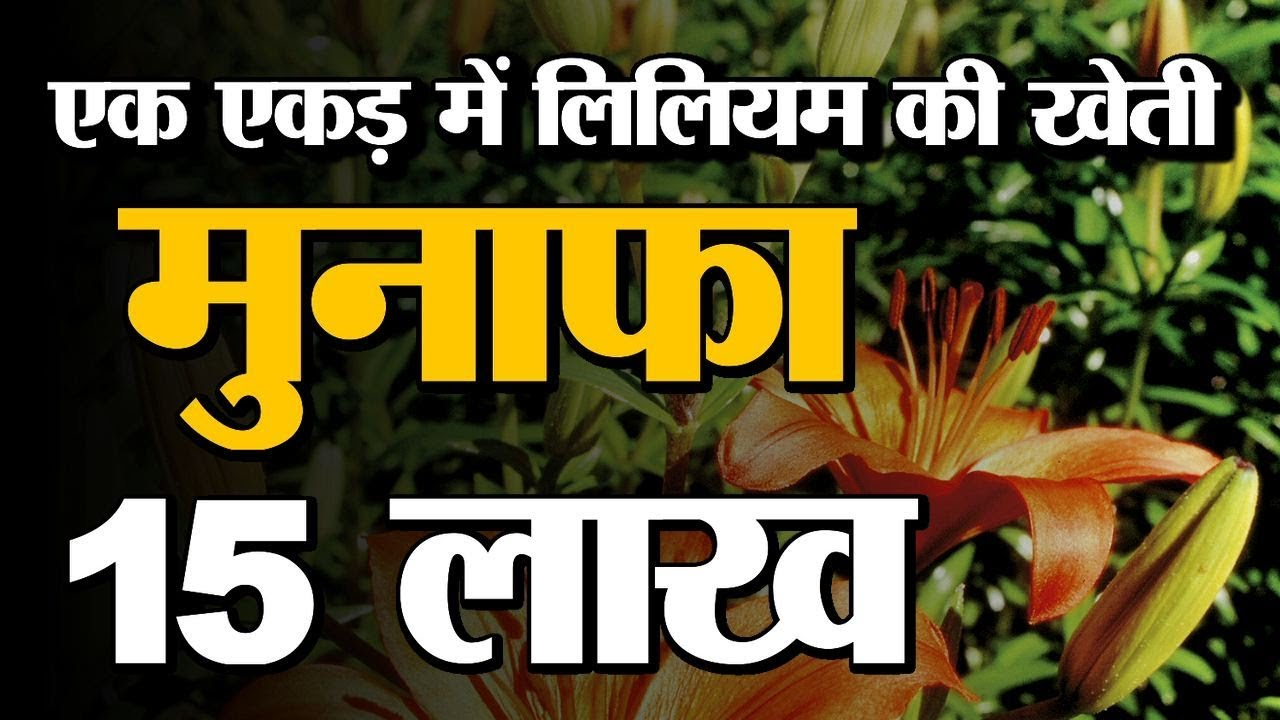 Lily Flower Farming Lilium Cultivation Benefits Small Farms Can Also Be Profitable Green Tv Youtube