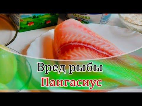 ➤ Вред рыбы пангасиус ➤