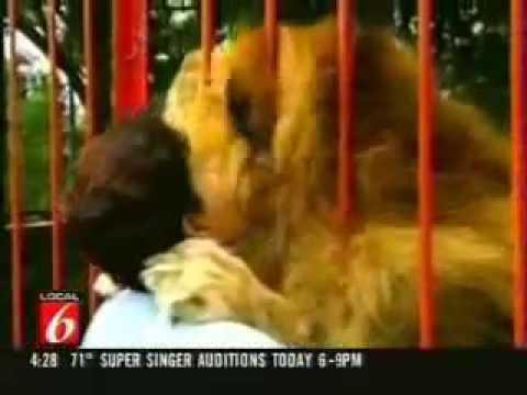 Elegant Lion Remembers Itu0027s Rescuer