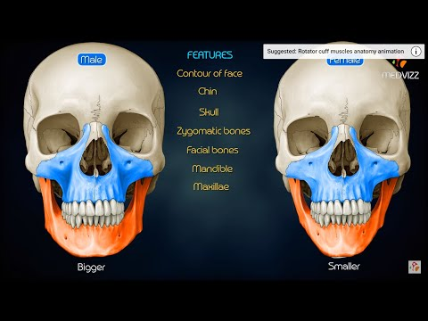 Sex differences in the skull