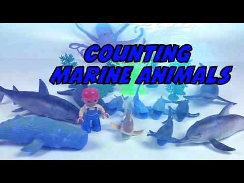 Learning with Toys Ep08 Marine Animals in Ocean world (Number & Size Play)