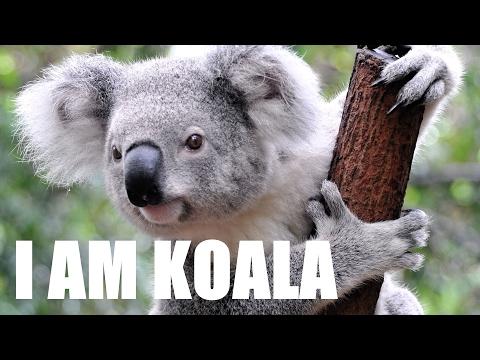 I AM KOALA (Song of the Koalas)