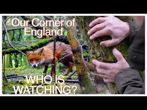 Ghosts in our Wood? Our Corner of England. Wildlife Cameras in the Thicket