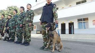 来自长江以南地区的搜救犬每年三月都会分批集中在云南省公安消防总队搜...