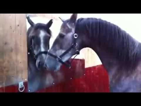 Cavallo che si guarda allo specchio spettacolare youtube - Scimmia che si guarda allo specchio ...