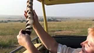 Gepard 2 - Safari Masai Mara Keňa