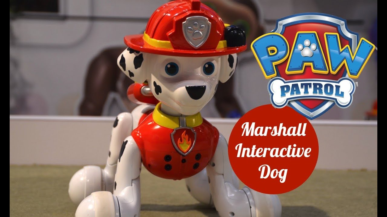 What Dog Is Zoomer From Paw Patrol