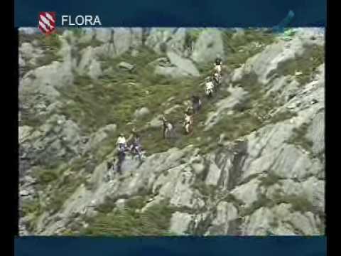 Florø & Flora kommune, municipality in Norway