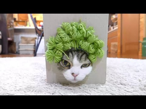 YOU CAN'T STOP LAUGHING AFTER THIS - The best ANIMAL compilation