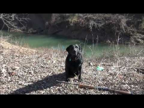 Awesome Black Lab Duck Hunting - Tribute