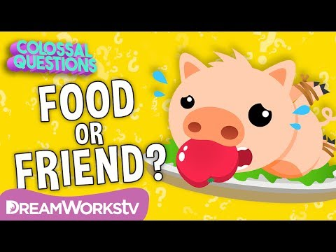 Why Do We Eat PIGS, but Not CATS?   COLOSSAL QUESTIONS
