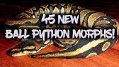 Ball Python Unboxing from Ralph Davis Reptiles: Super