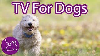 Dog TV: Interactive Virtual Dog Walk (TESTED)