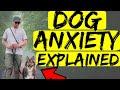Dog Anxiety Medication? Dog Anxiety Training? Dog Anxiety Explained