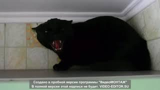 Очень Злые Коты!