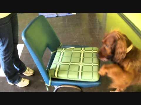 Shame Dog Trick with Brandy