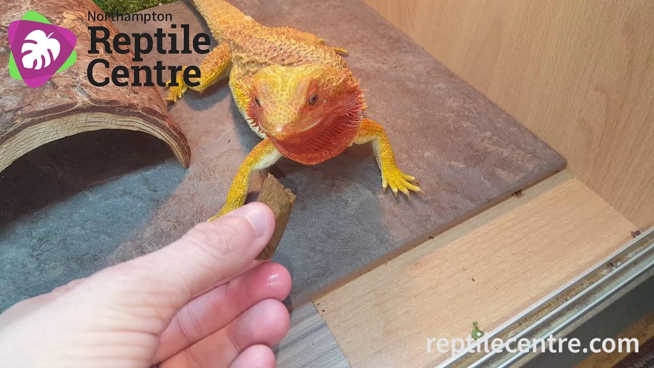Repashy Beardie Buffet - Bearded Dragon Taste Test
