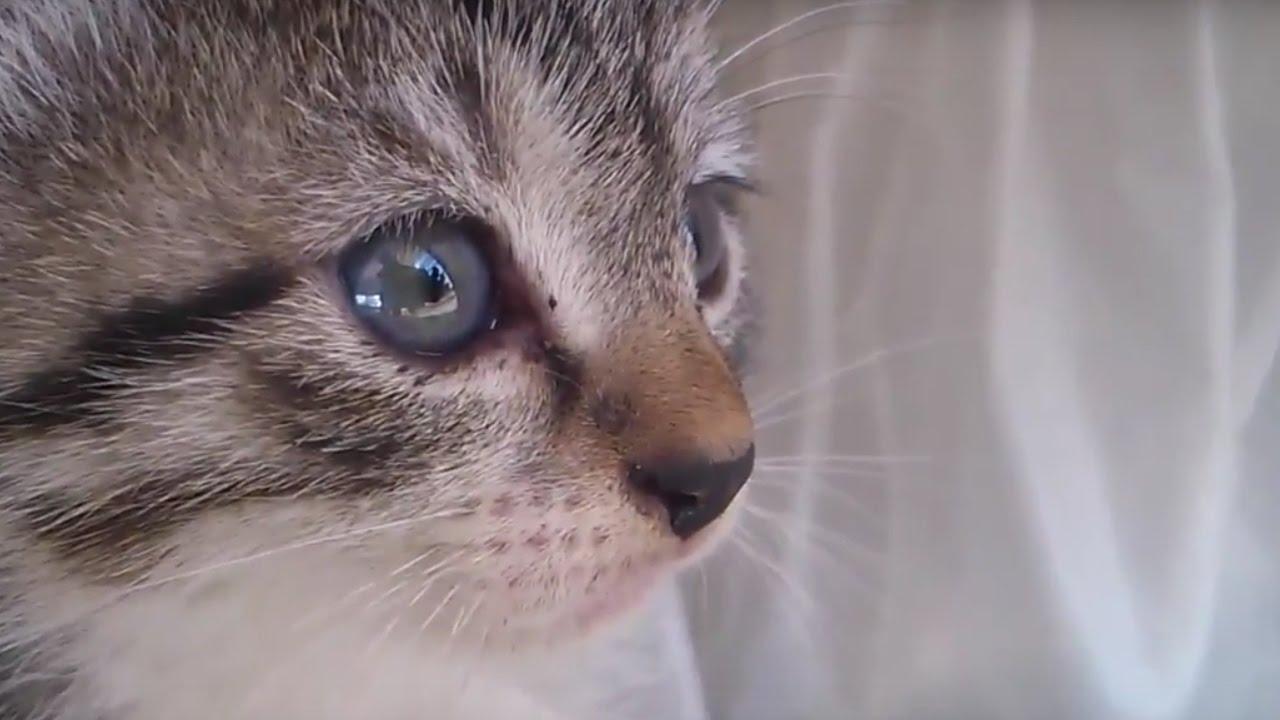 картинка плачущего котенка своего рода договор