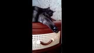 месть кошке
