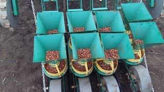 Посадка лука под выгонку и другие овощи